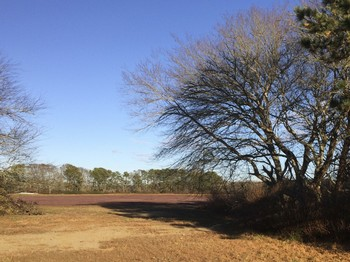 IMG_4469-trees-1024x768.jpg