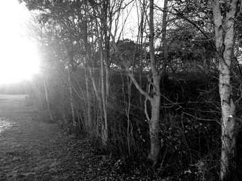 IMG_4517-trees-bw-1024x768.jpg